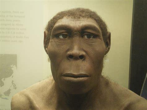 homo erectus homo habilis homoerectus homo neanderthalensis v 233 rifier homo pictures to pin on