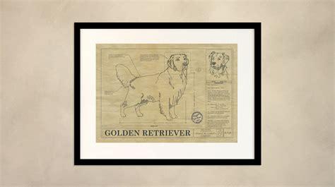 golden retriever blueprint golden retriever drawing animal blueprint company