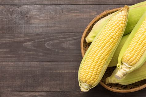 can dogs eat corn facts about corn food for dogs