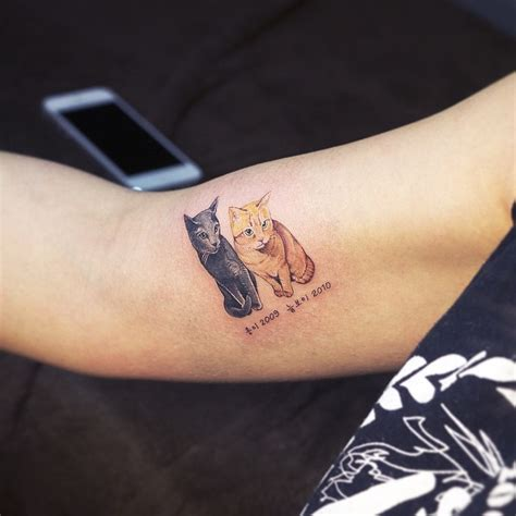 korean tattoo laws cat tattoos may be the cutest way to break the law in
