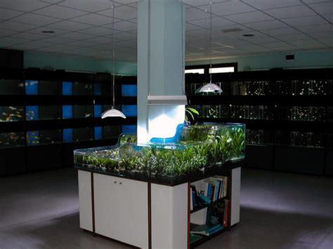 vasca acquario su misura vasche per acquari artigianali fantail