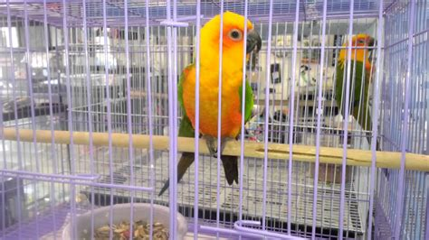 beautiful parrots for sale at a pet store youtube