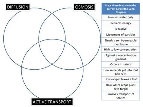 diffusion and osmosis venn diagram diffusion osmosis active transport venn puzzle by biogas66