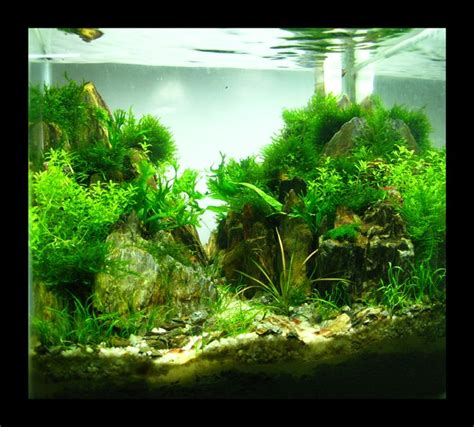 408 best images about aquascaping on fish