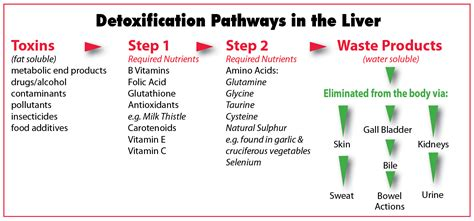 Detox Pathways Of The Liver by Detoxification Sphere Fitness Studio Sphere Health And