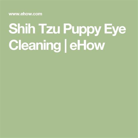 shih tzu eye cleaning 1000 ideas about puppy on baby dogs baby dogs and dogs