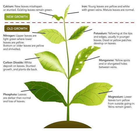 plant nutrient deficiency chart quotes