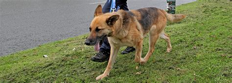 how to your to walk without pulling your to stop pulling on the lead rspca