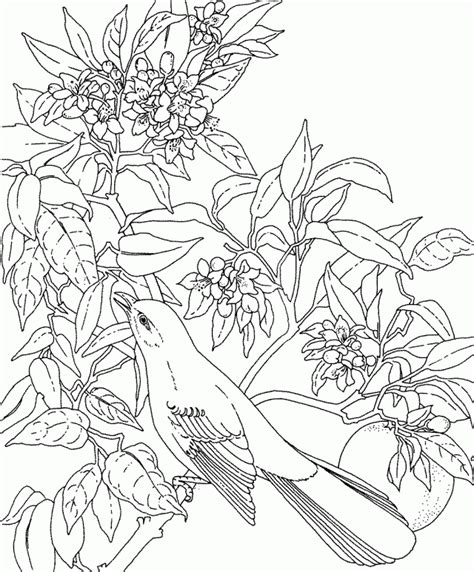 ead flowers colouring pages 203240 tropical flower