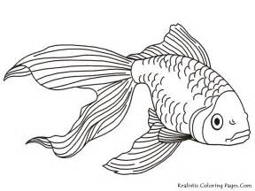 goldfish coloring page goldfish coloring pages realistic coloring pages
