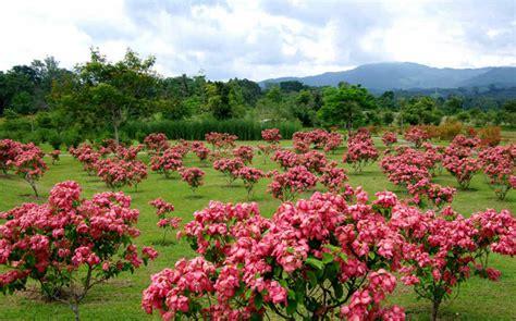 Xishuangbanna Tropical Botanical Garden Some Photos Of Xtbg Xishuangbanna Tropical Botanical Garden Cas