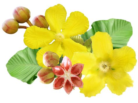 Flower Bunga icon bunga