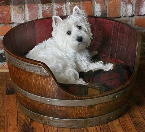 How To Get Wine Out Of Mattress by 22 Best Dogs Day Out Images On Animals And Best Friends