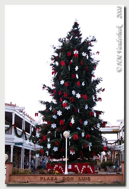 old town christmas tree albuquerque daily photo