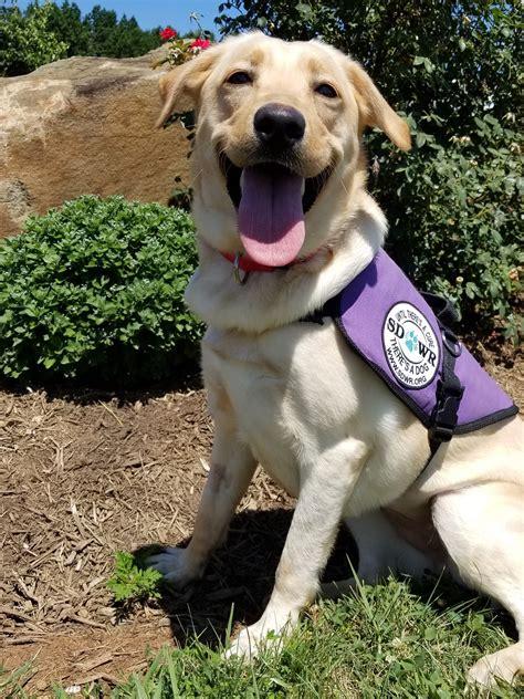 diabetic service dogs diabetic alert dogs by sdwr service dogs by warren
