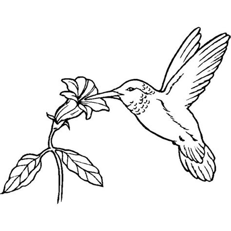 realistic hummingbird coloring page bird coloring sheets