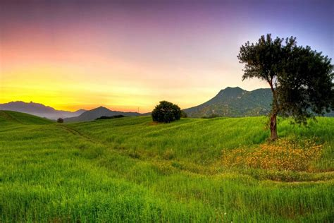 Nature Hd by Beautiful Greenery Of Real Nature Wallpaper Free
