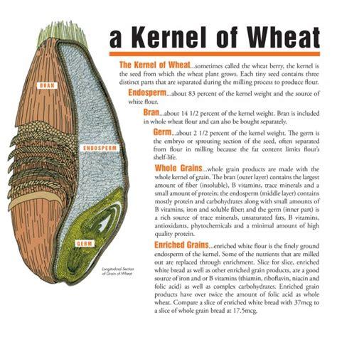 whole grain kernel parts make half your servings whole grain kansas wheat
