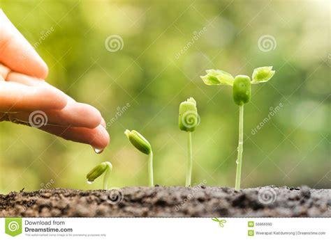 baby plants baby plants seedling stock photo image 56866990