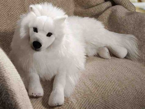 half pomeranian half japanese spitz breed color charts breeds picture