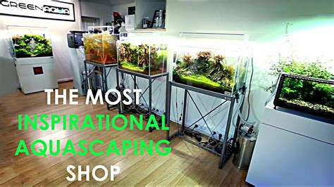 aquascaping shop is this the best aquascaping shop in the world youtube