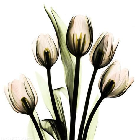 albert koetsier crystal flowers x ray tulip bouquet art by albert