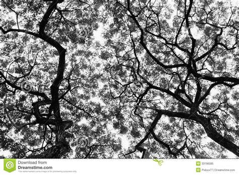 black and white tree pattern tree pattern in black and white style royalty free stock