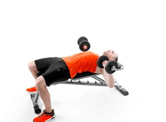 exercices sur banc de musculation 6 exercices avec banc de musculation domyos by decathlon