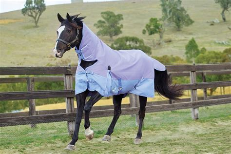 Different Types Of Rugs For Horses Buying A Turnout Rug For Your Horse Equine Superstore