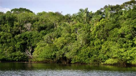 el amazonas ha reducido su capacidad para absorber co2 - Amazonas Hängestuhl