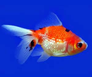 Fun Facts on Fish for kids ***