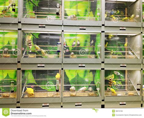 bird cages in pet shop royalty free stock images image