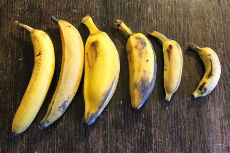 tiny banana name edible tropicals how to propagate bananas