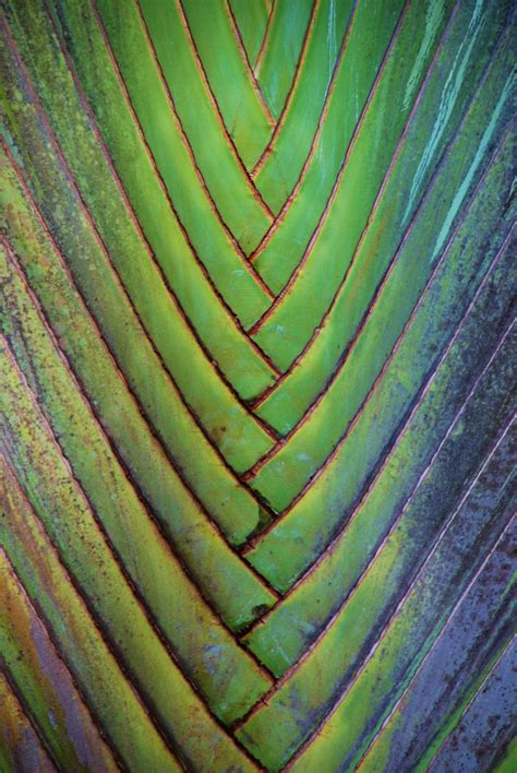 images of pattern in nature pin by janeth rodriguez ospina on ideas pinterest