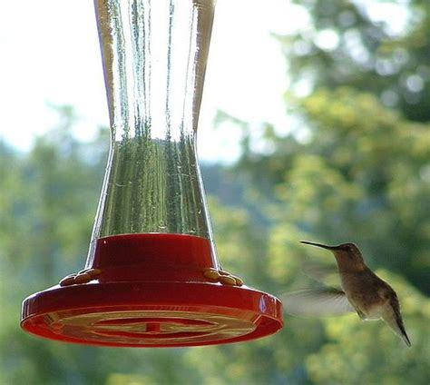 homemade hummingbird nectar i ve been doing this for