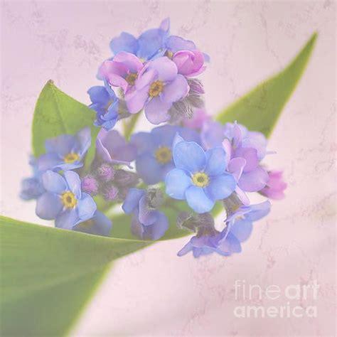 farbpalette frühling 220 ber 1 000 ideen zu lila tapeten auf
