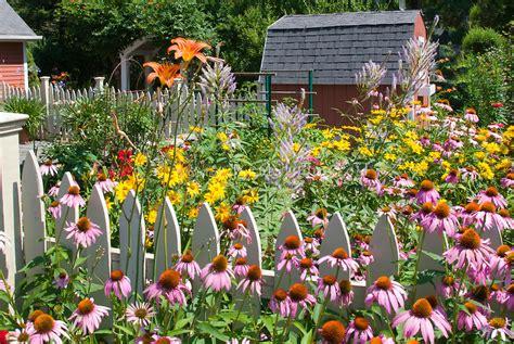 Summer Garden Plants by Echinacea Veronicastrum Daylilies Rudbeckia Plant
