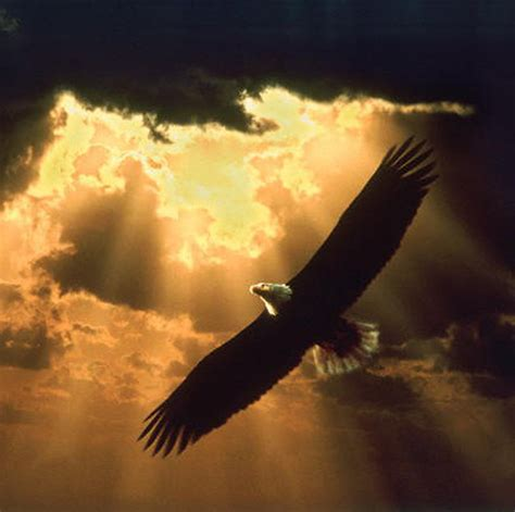 flying with one wing god s grace in our times of adversity books and god quotes about eagles quotesgram