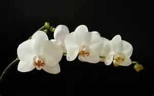 орхидея записи в рубрике орхидея дневник