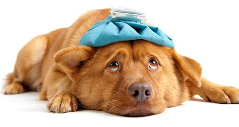 dogs aid a checklist for your s aid kit cesar s way