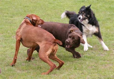 aggression in dogs aggression comes in many different types