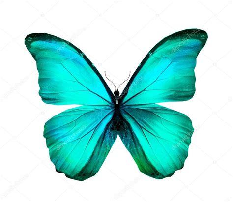 imagenes de mariposas azul turquesa mariposa morpho azul turquesa aislado en blanco foto de