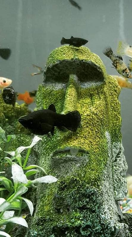 aquarium wallpapers   zedge