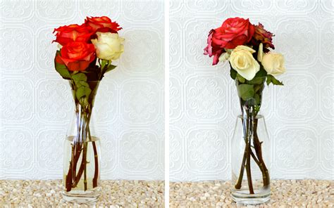 How To Keep Flowers In A Vase Alive by How To Keep Roses Alive More