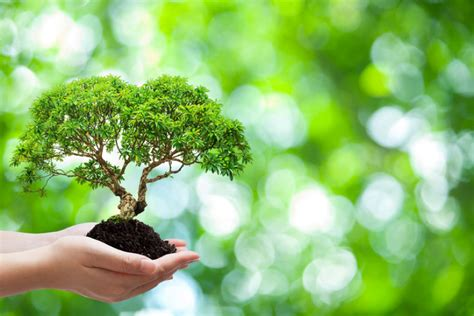 Mba In Environmental Science by The Importance Of Ethical Practice In A Master S Degree In