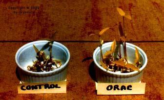 Orgonics Wilhelm Reich Orgone Accumulators And Products