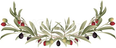 Green Kitchen Design Ideas by Decorative Olive Branch Border Stock Vector Freeimages Com