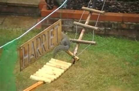 backyard obstacle course for dogs guy builds a squirrel obstacle course in his backyard