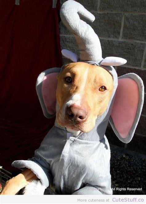 dog costume elephant  adorable dog halloween costumes