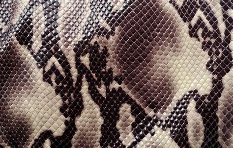 Leopard Chetah Skin Iphone Dan Semua Hp wallpaper texture a snake s skin coloring animal